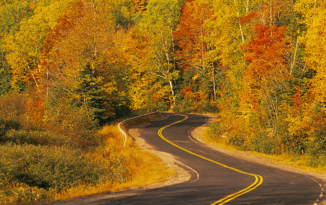 fall_road_through_trees