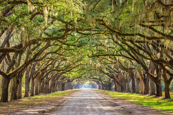 Best Southern States for Travel Nursing
