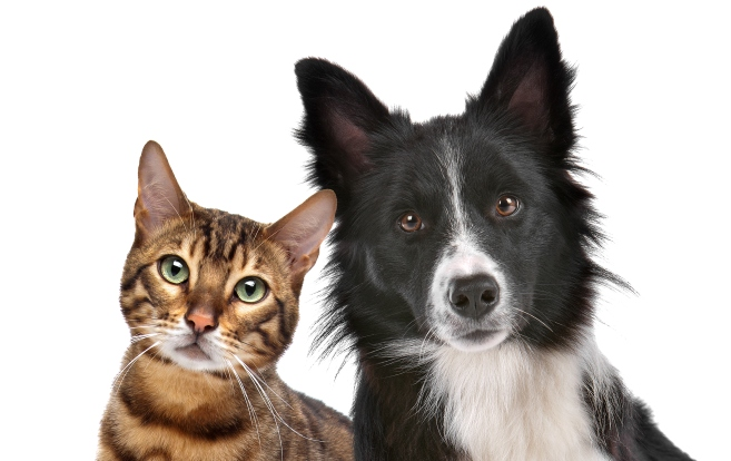 Dogs vs. Cats: Which Pets Make the Best Travel Companions?